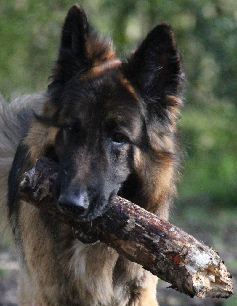 Bear-Hockley-Woods-3crop
