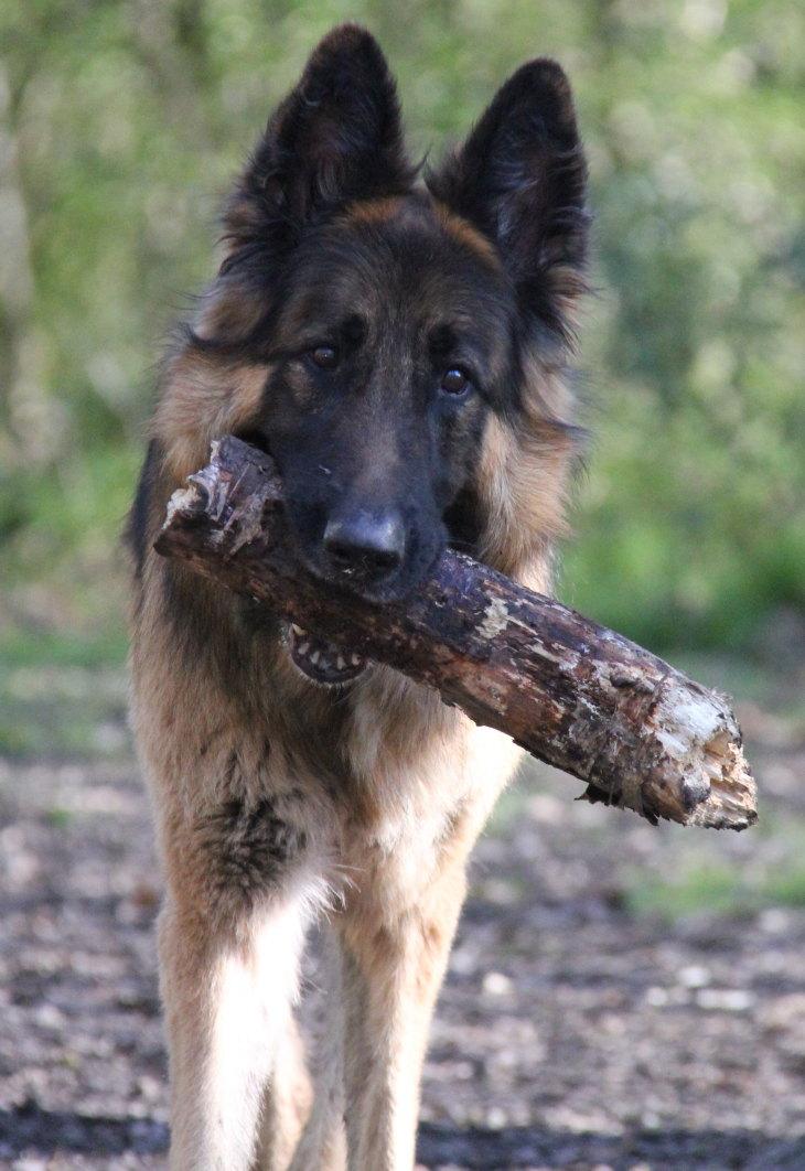 Bear-Hockley-Woods-4crop