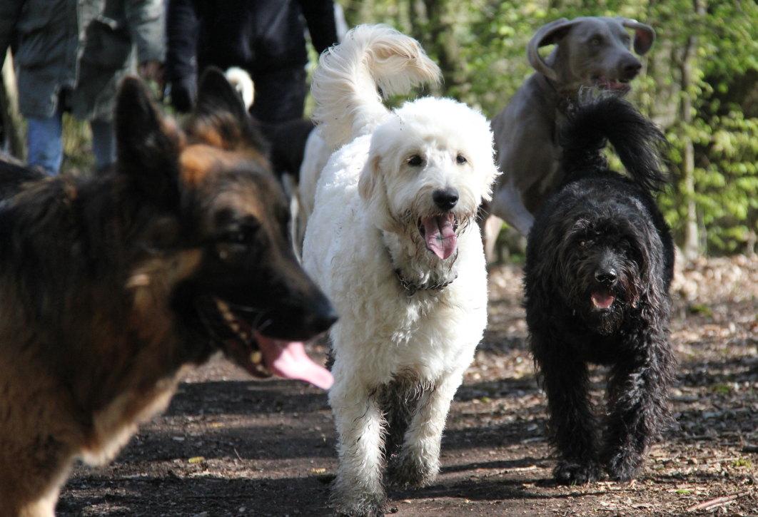 Bear-Toby-Sidney-Casper-Hockley-Woods