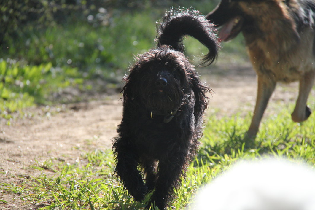 Dog Walking Places In Essex
