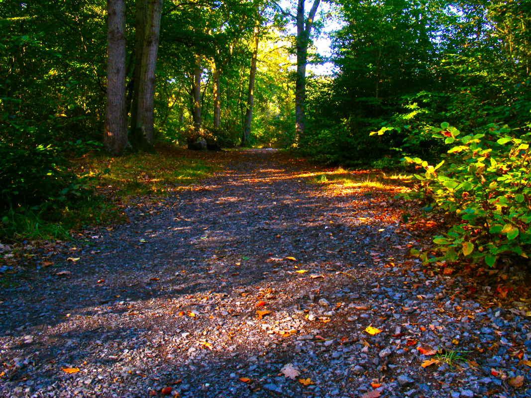 wild-woods-day