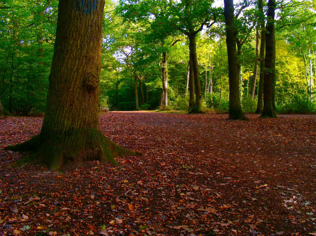 Hockley-Woods-Leaf