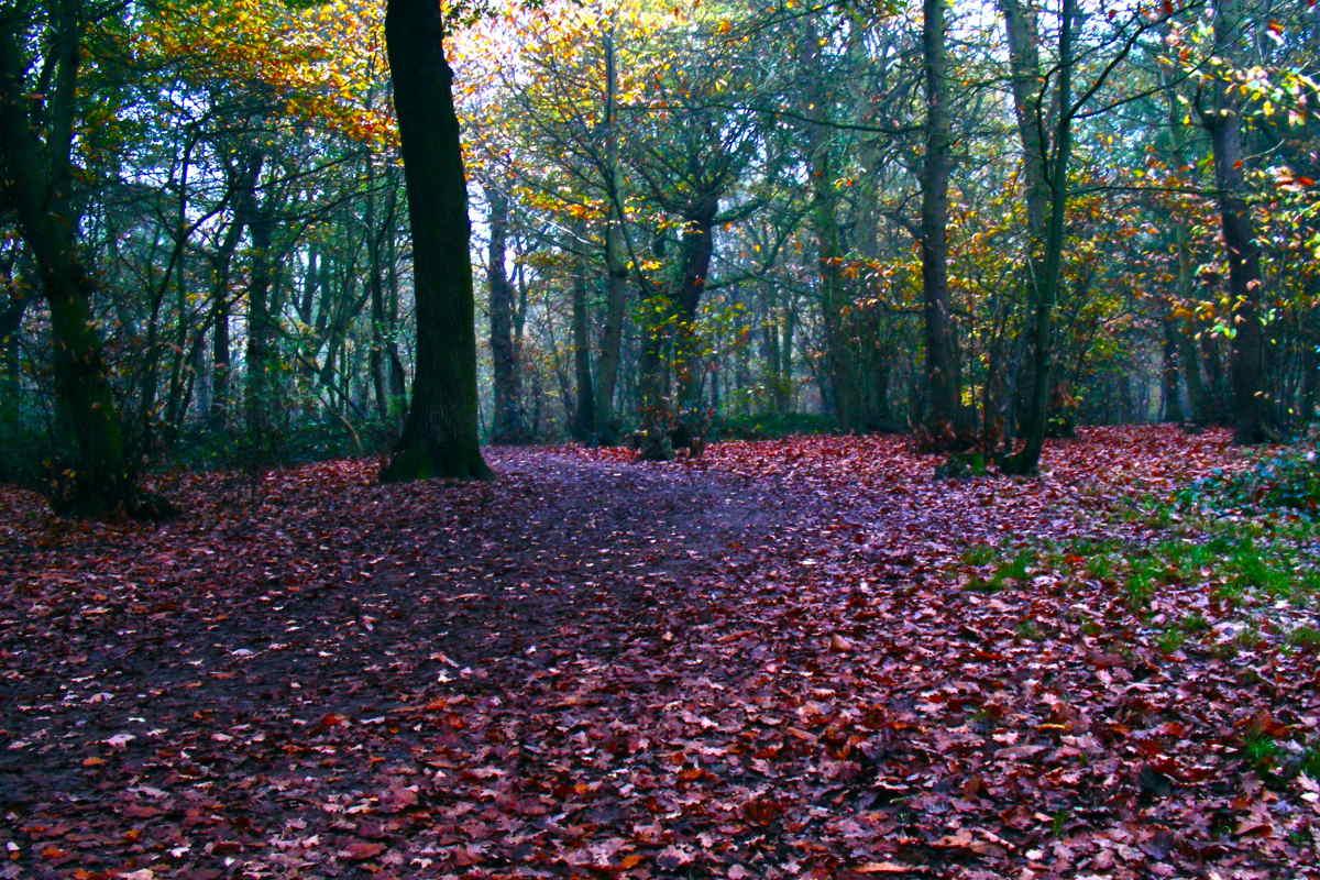 Hockley-Woods-Leaves