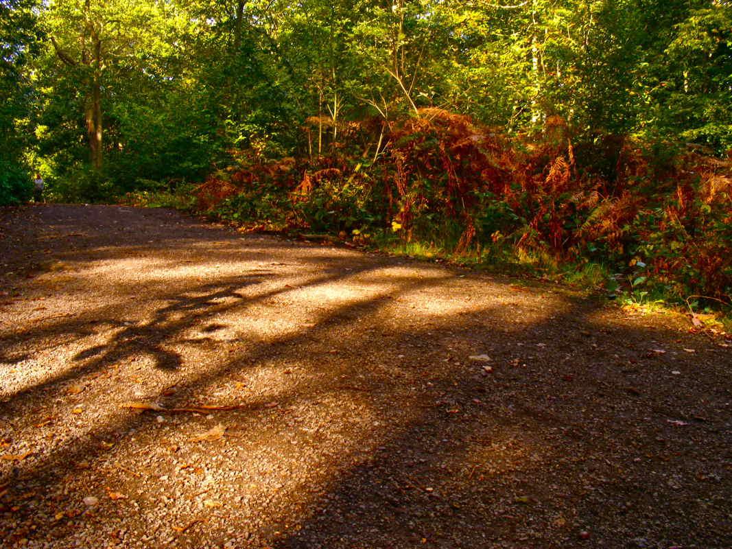 Hockley-Woods-Sunlight