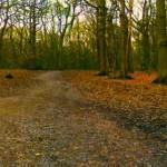 Woods-path