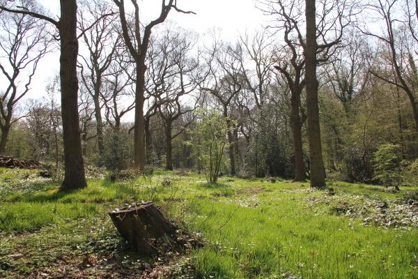 Wild-Woods
